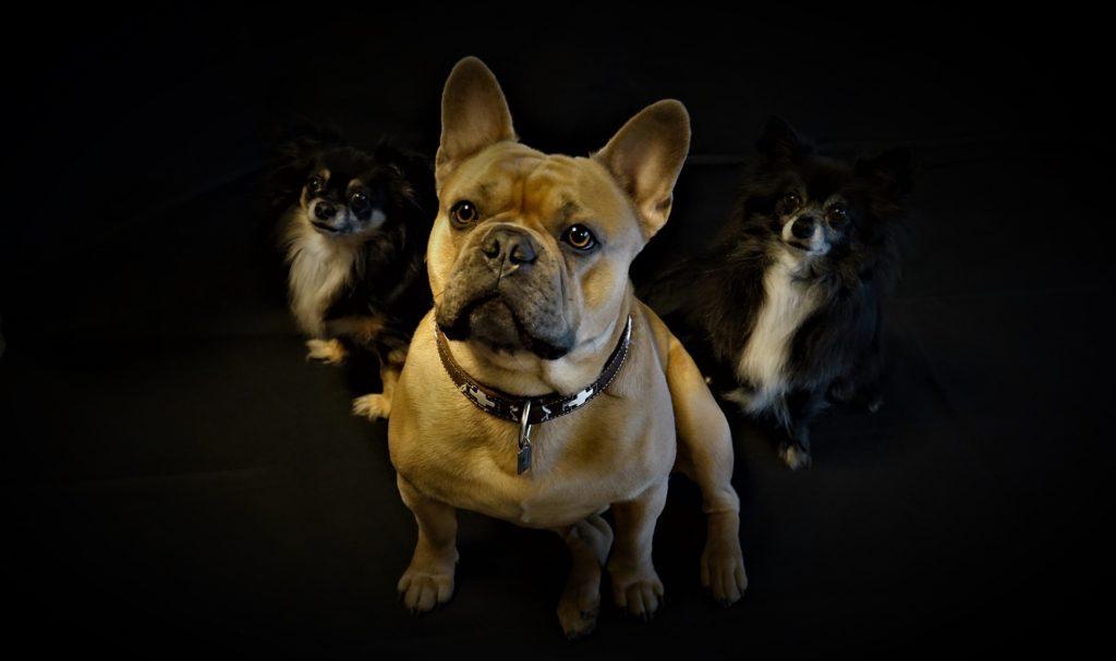 Collier pour chien : faire le bon choix