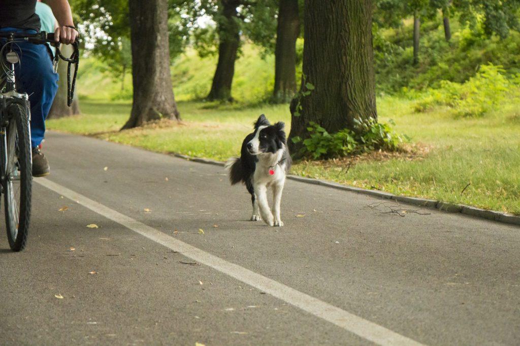 Remorques pour chien : quelle utilité pour quels chiens