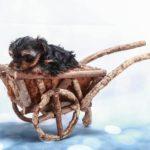 Pourquoi promener un chien en remorque et comment la choisir