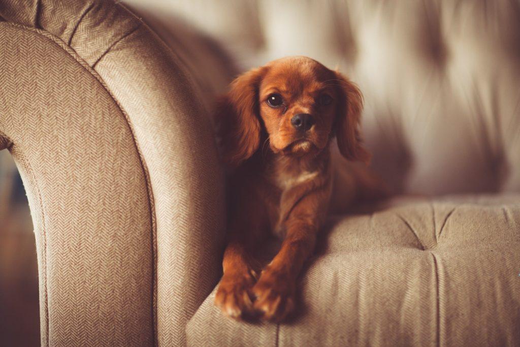 Escaliers d'accès au canapé pour les petits chiens.