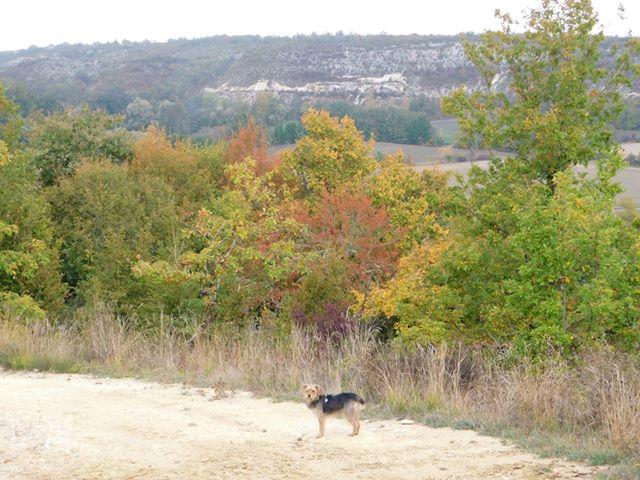 Parc Naturel Regional des Causses en Quercy