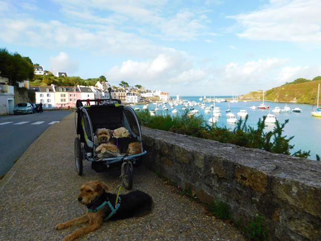 Sauzon à Belle-Île en Mer avec un chien