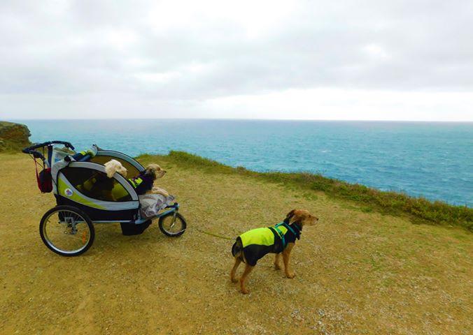 Tour de Belle-Île avec un chien