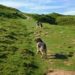 Sur les chemins de Compostelle avec un chien