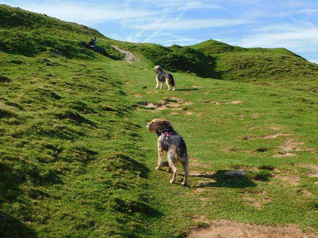 Pyrénées Atlantique sur les chemins de Compostelle avec 3 chiens