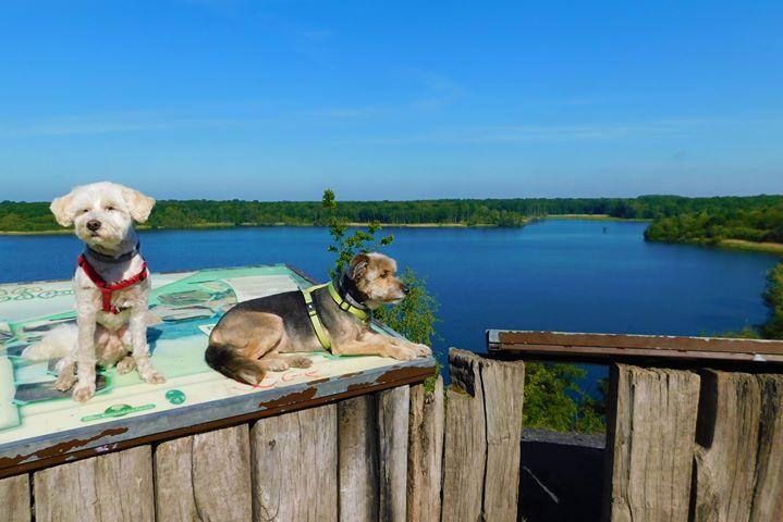 Rando et relax en Nord-Pas-de-Calais : la mare à Goriaux avec un chien