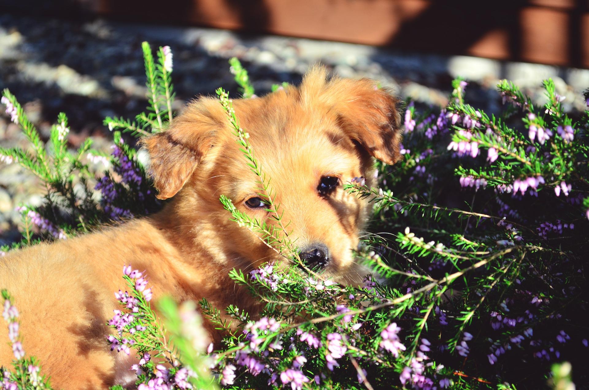 Avoir un chien bien dans sa tête grâce aux voyages