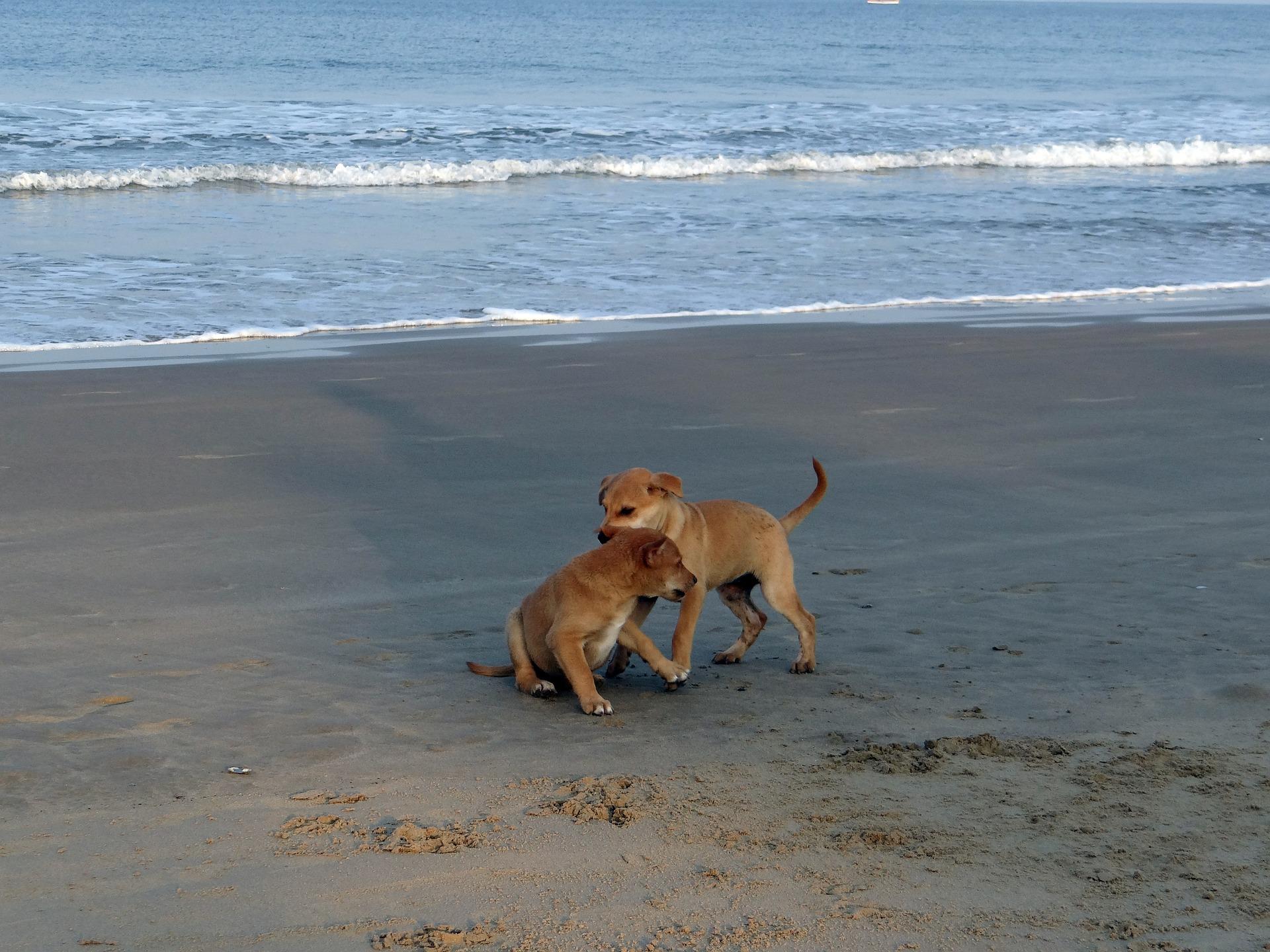 Un chien épanoui et en santé grâce aux voyages