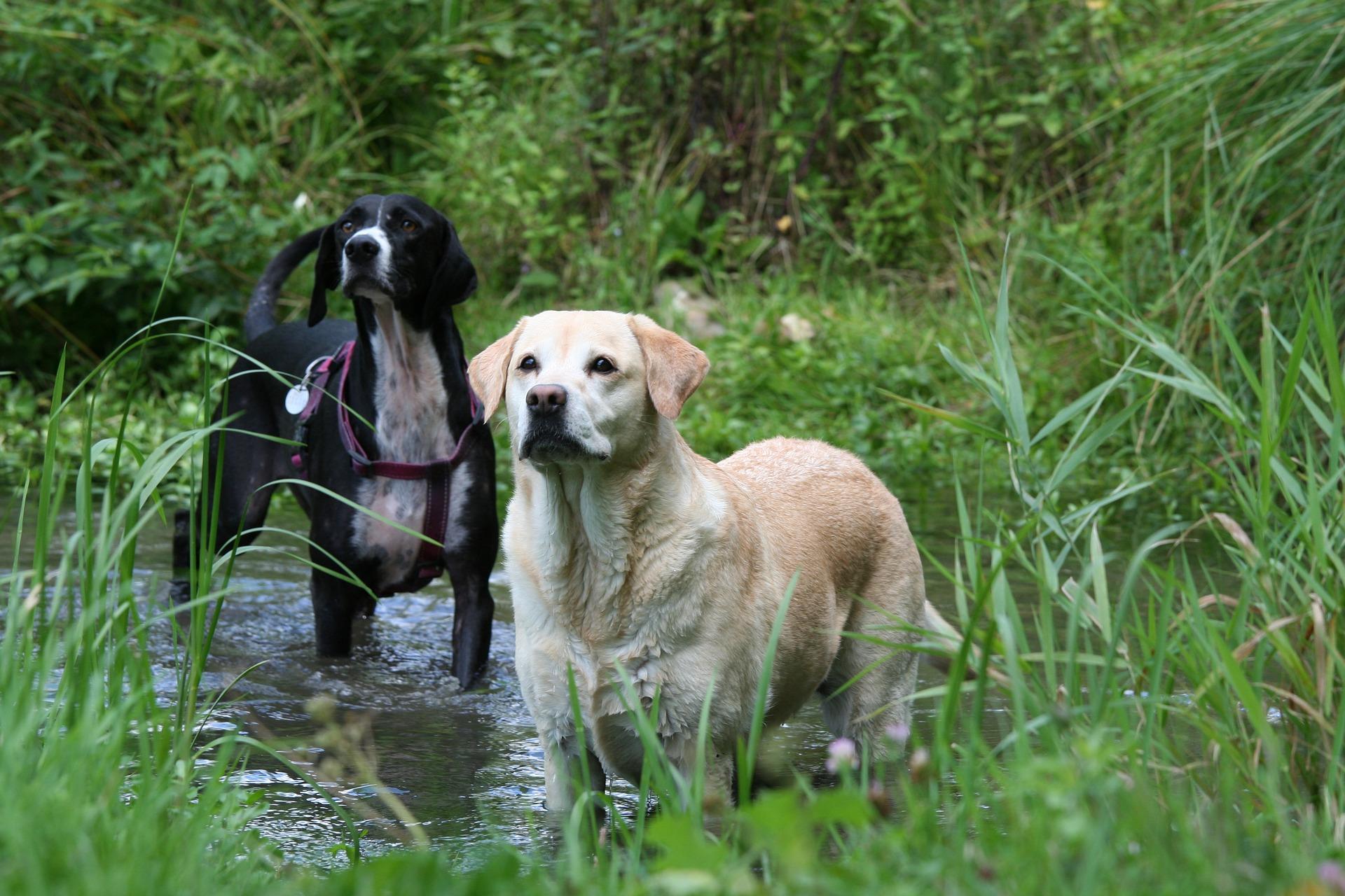 Importance de l'hydratation du chien