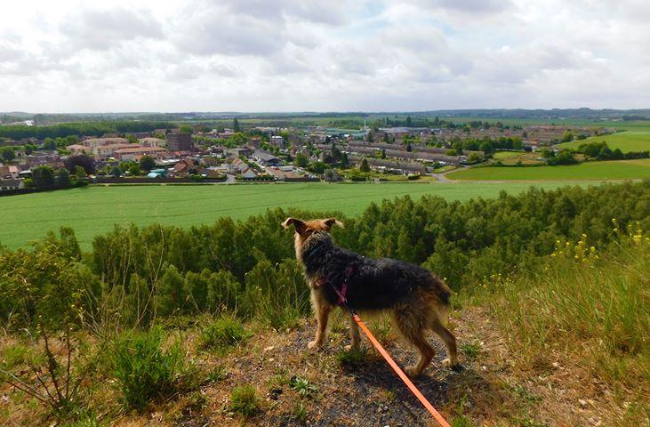 Balade avec un chien au terril de Pinchonvalles