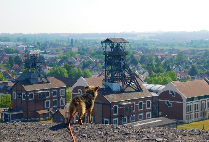 Promenade canine : le terril 110 de Oignies.