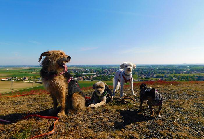 Les terrils jumeaux de Loos-en-Gohelle avec un chien
