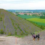 Visiter les Terrils du Nord-Pas-de-Calais avec un chien