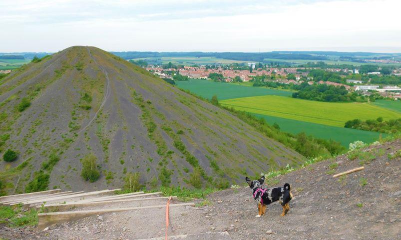 Nord-Pas-de-Calais : visiter les terrils avec un chien