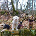 Randonner dans le massif forestier de Fontainebleau avec un chien