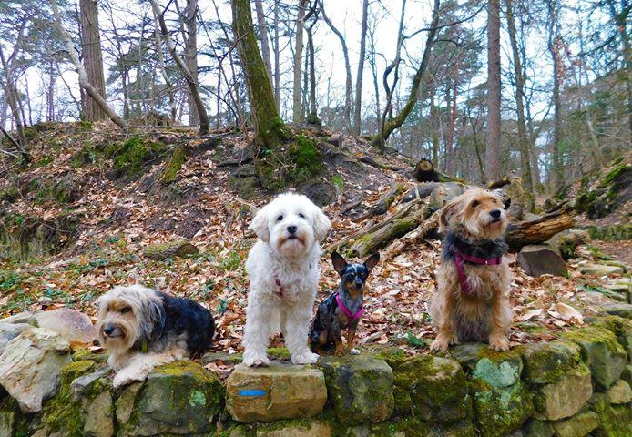 Randonnée avec chien massif Fontainebleau