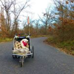 route forestière avec chien massif fontainebleau