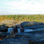 Gorges massif Fontainebleau avec chiens