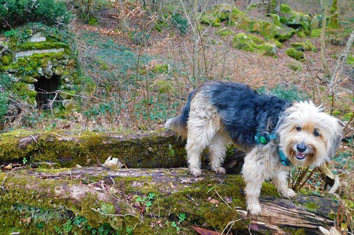 découvrir les fontaines du massif forestier de Fontainebleau avec un chien