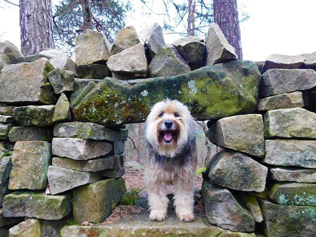 chien promenade sentier découverte massif de Fontainebleau