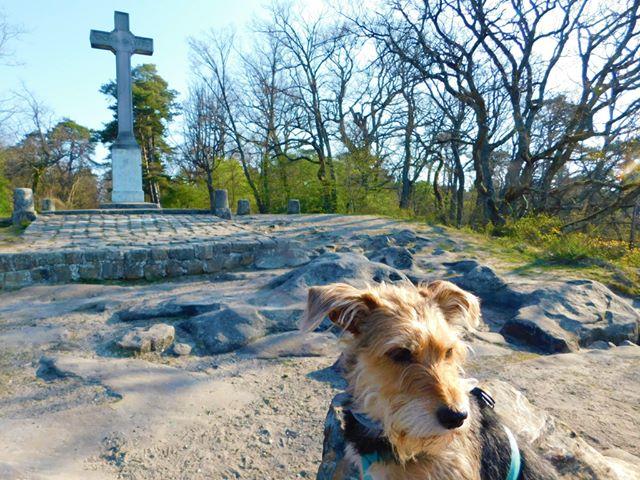 Croix du Calvaire Massif Fontainebleau avec chien