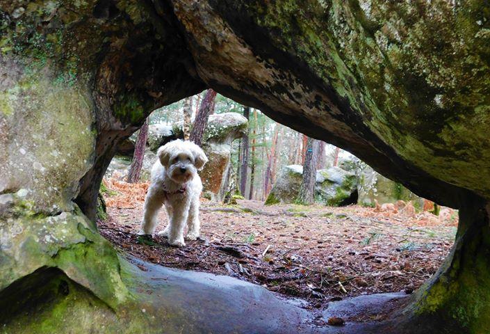 rando avec chien sur sentiers bleus massif de Fontainebleau