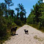 chemins sablonneux massif Fontainebleau