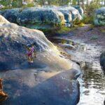 Massif de Fontainebleau avec chien