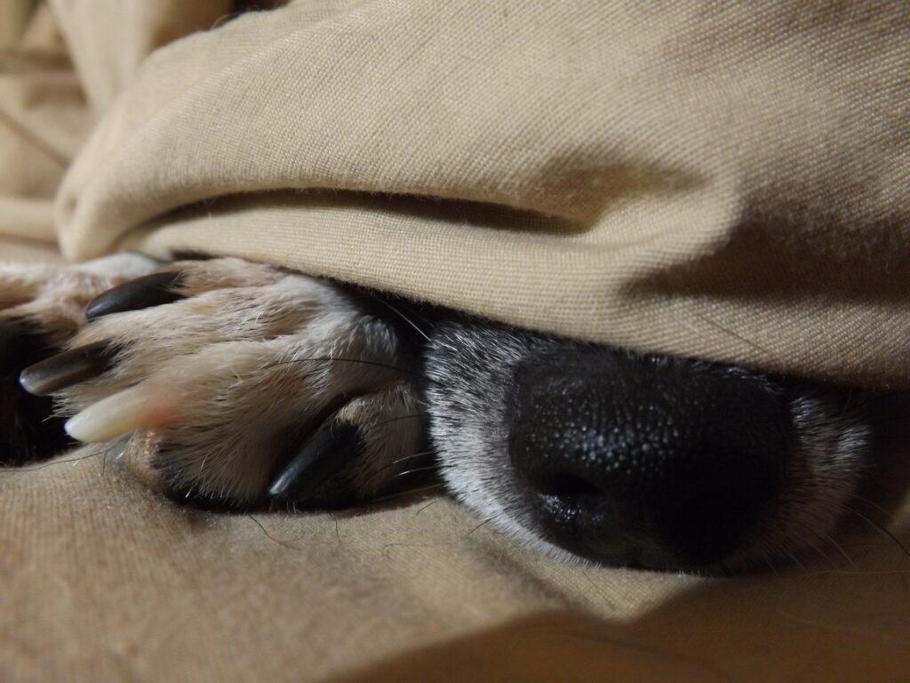 Comment faire dormir son chien en bivouac