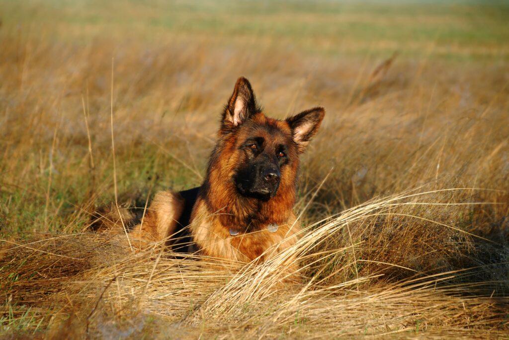 Comment gérer l'alimentation du chien en bivouac