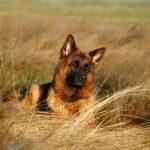 Comment gérer l'alimentation d'un chien en bivouac