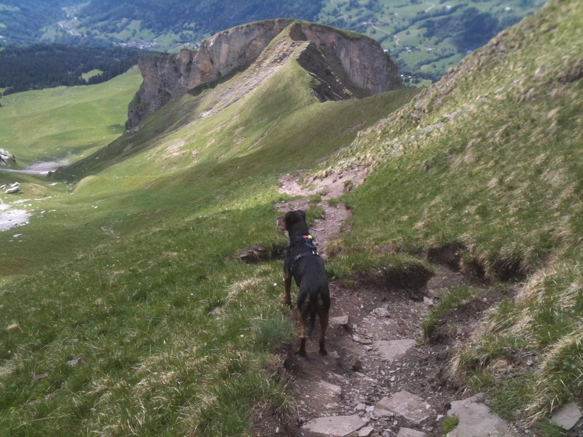 randonner avec un chien au lac du Mont Charvin