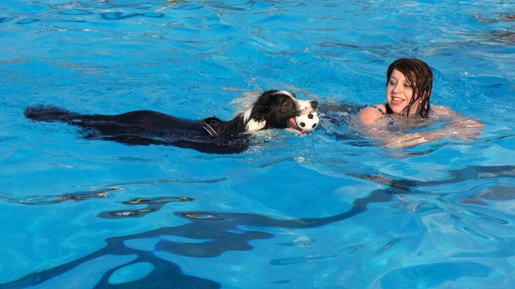 Nager avec son chien pour le rafraîchir en été