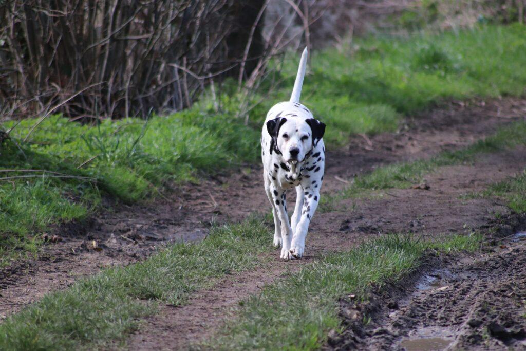 Préparation des bagages d'alimentation du chien et questions