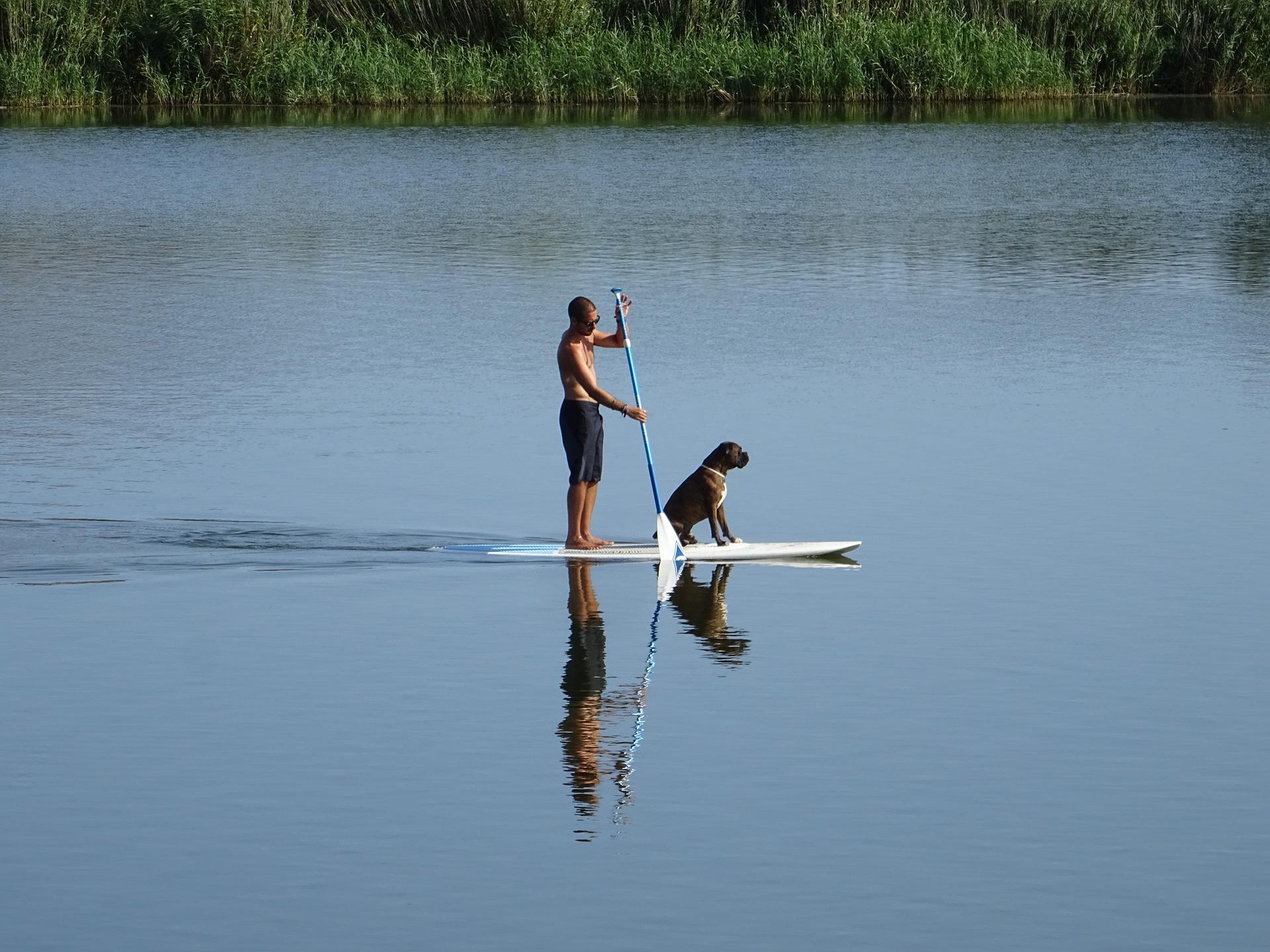 Faire du Paddle ou du kayak avec son chien c'est possible