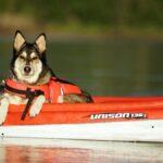Comment choisir le gilet de sauvetage de son chien