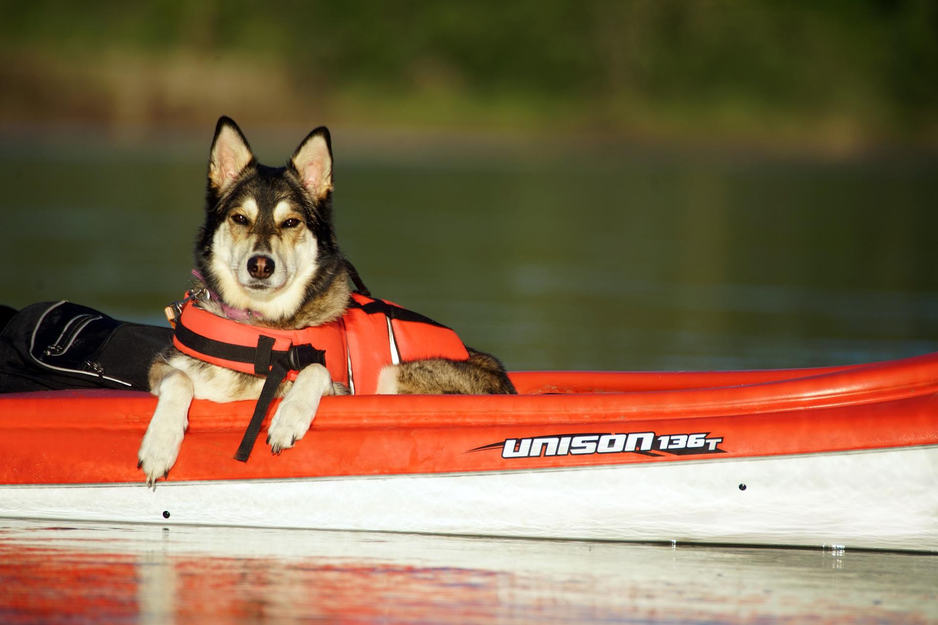 Comment choisir le harnais de sauvetage de son chien