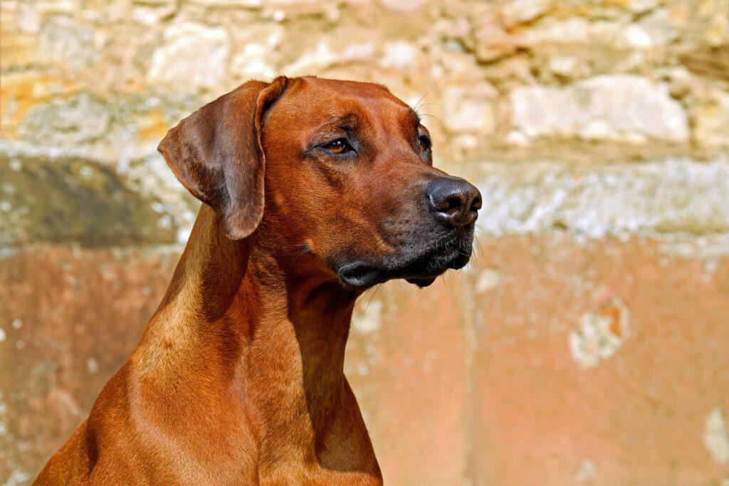 Changer de marque de croquettes pour son chien