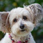 Artisans créateurs d'accessoires pour chiens