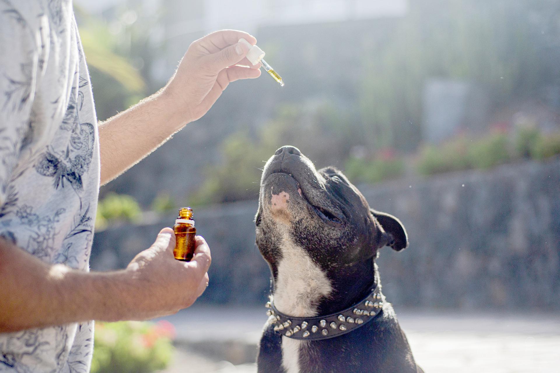 Bienfaits de l'huile de CBD sur les animaux