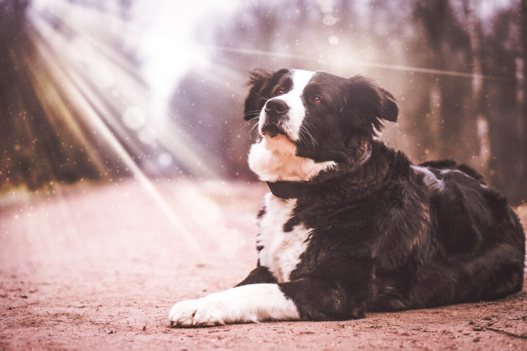 Femme avec son chien en randonnée : l'importance de faire son itinéraire