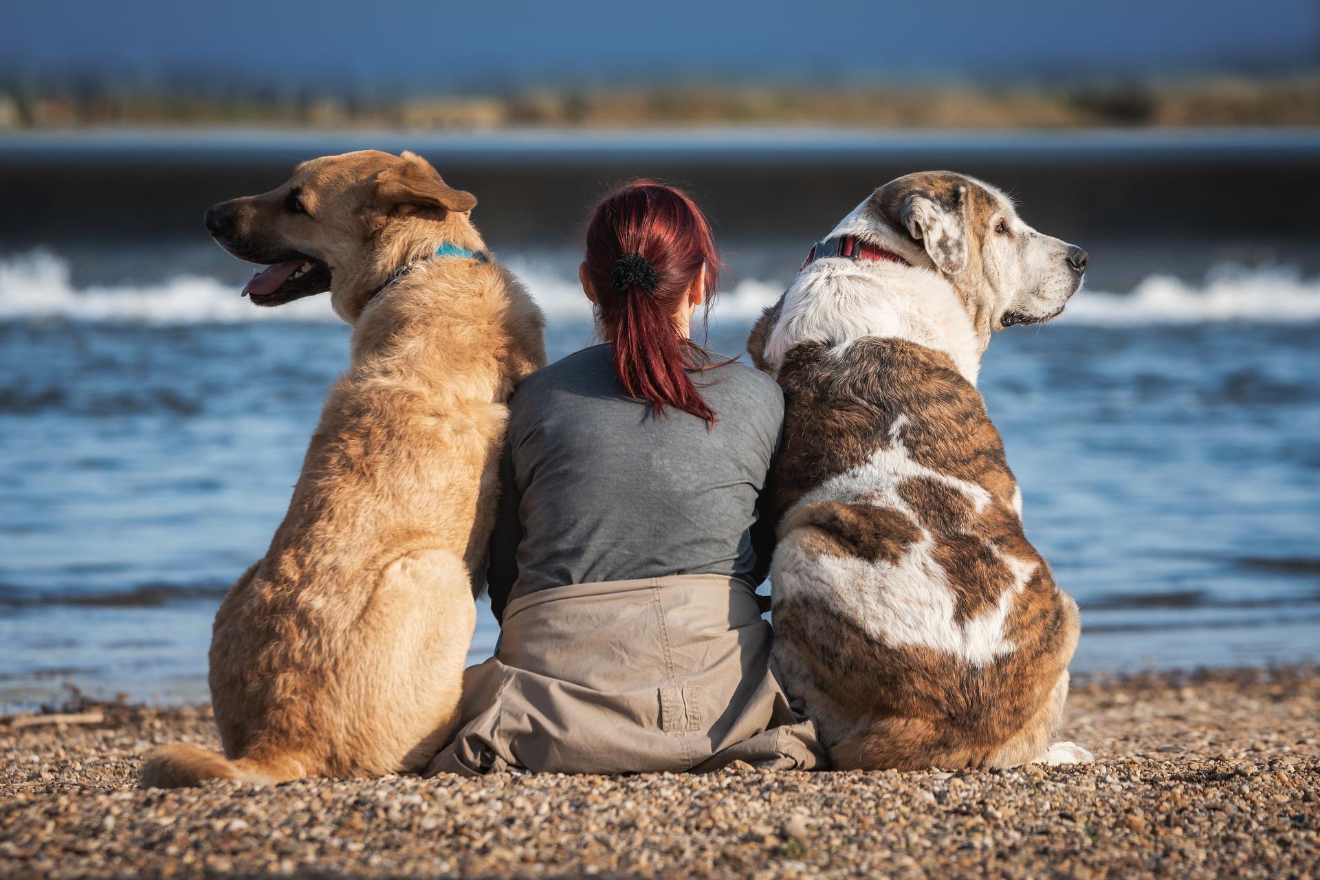 Randonnée femme/chien : les points de vigilance