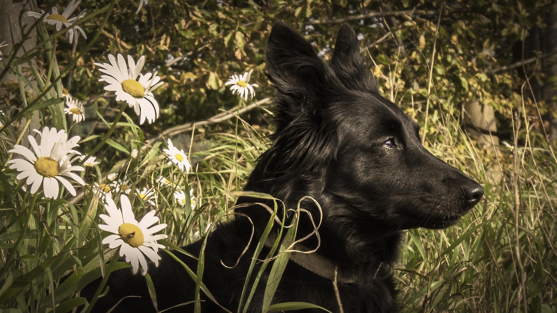 Randonner seule avec son chien : garder son objectif en tête.