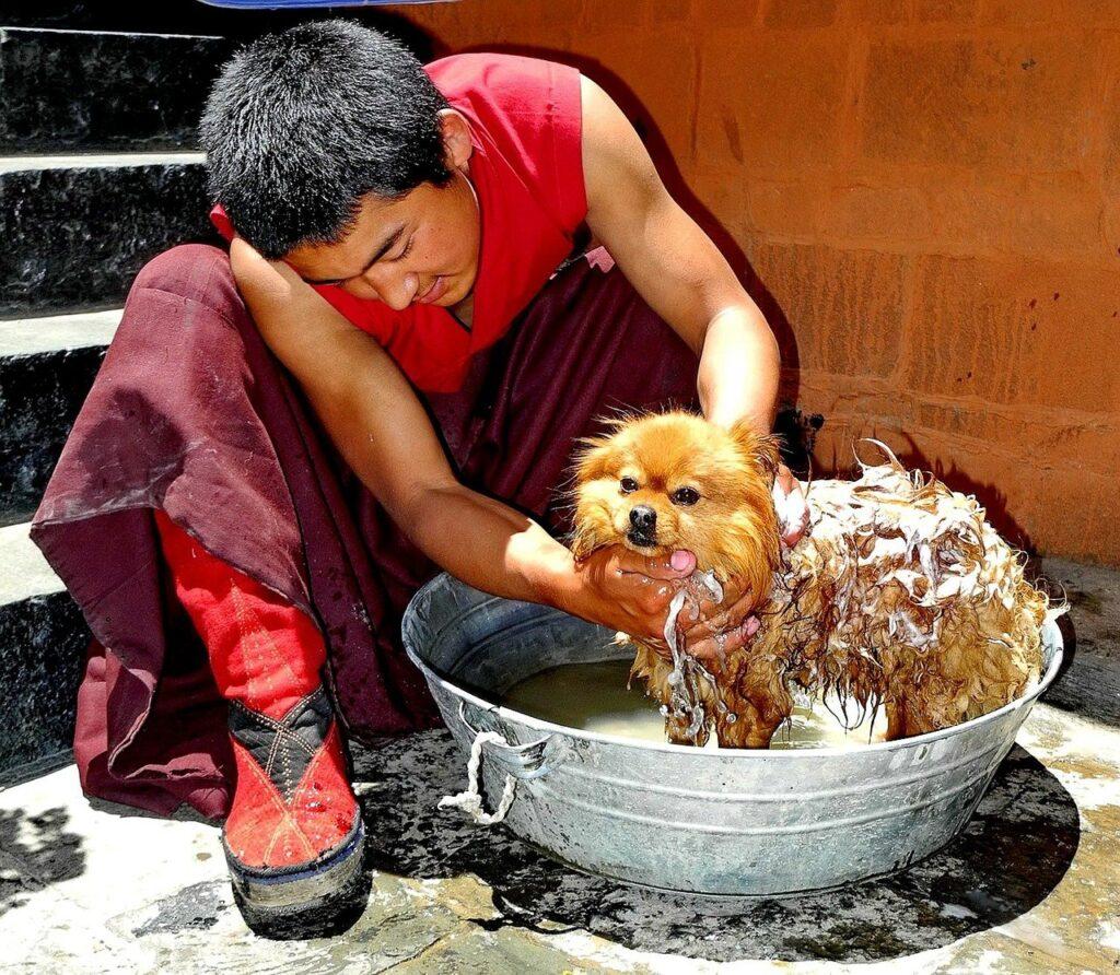 Fréquence de lavage d'un chien : le moins souvent possible