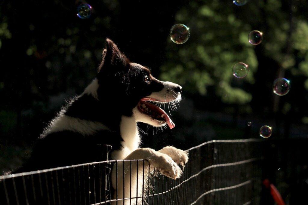 Les activités extérieurs possible durant le reconfinement avec un chien