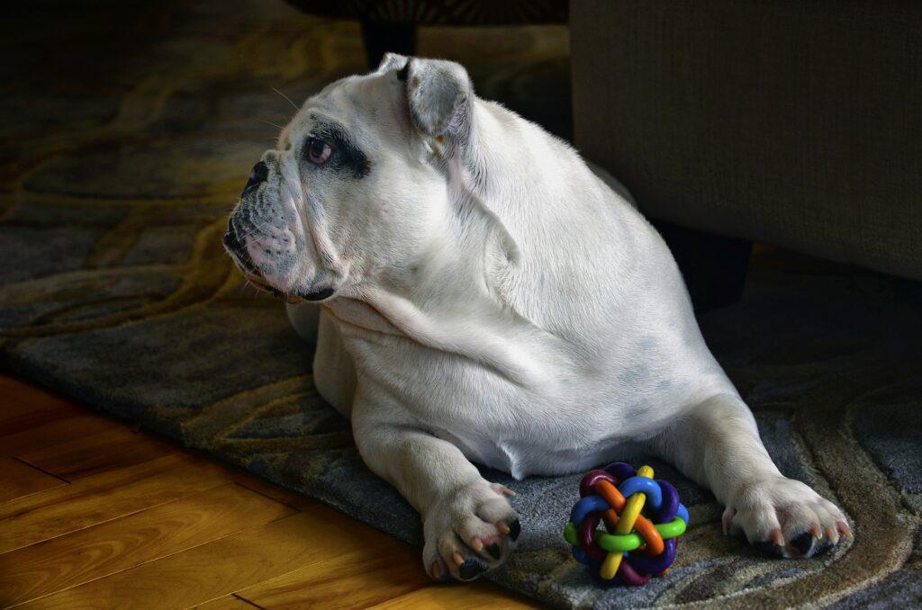 Les activités intérieures à faire avec son chien durant le reconfinement