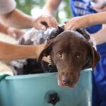 Comment et quand laver un chien : fréquence et précautions