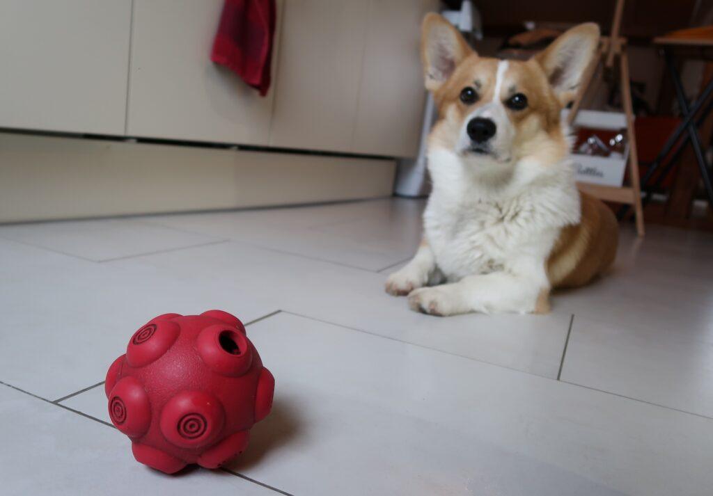La balle distributrice de friandises pour chien